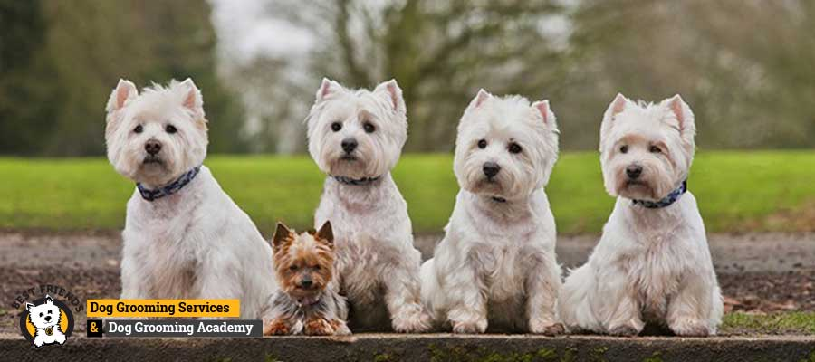 Dog Grooming Courses Uk