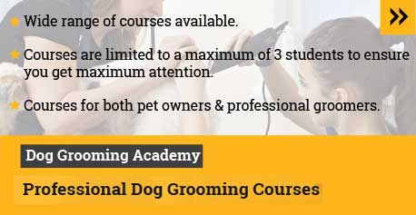 dog grooming runcorn cheshire